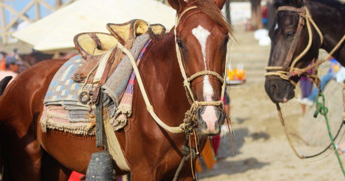 Quanto costa praticare equitazione